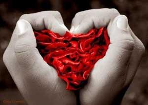 Paixão não é amor