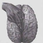 Inteligência é Afrodisíaco