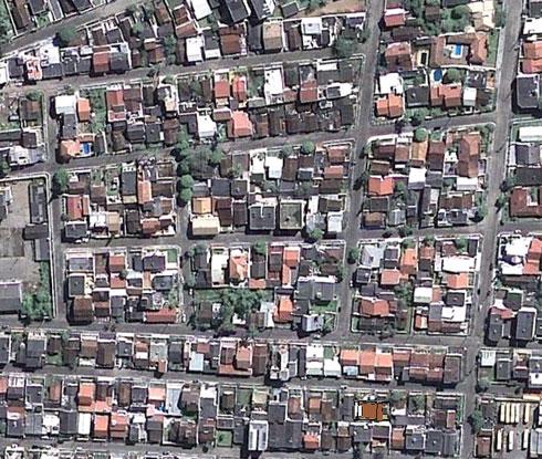 Arborização em Itajaí, SC - O que? Onde? Como?