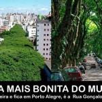 Árvores contra o aquecimento global