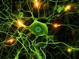 Seriam os neurônios antenas?