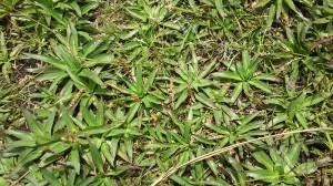 De longe parece grama, de perto, são pequenas bromélias. Mas e daí né, vou indo, daqui a pouco começa a sessão da tarde