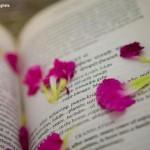 Livros sobre Carma e Reencarnação – Guia de Leitura