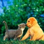 A atenção e a importância do outro