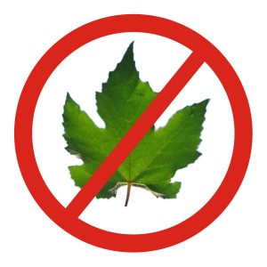 Vamos proibir as plantas que originam as bebidas alcoólicas também