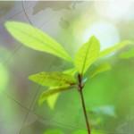 Seicho-no-ie – Sabedoria para a vida