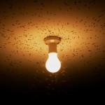 Luz própria, inveja e recalque