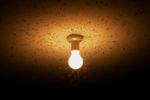 Se não for lâmpada, cuide para não ser inseto