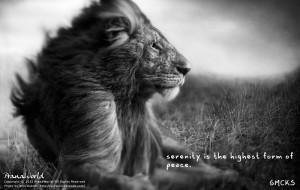 O leão não faz drama. Seja como o leão.