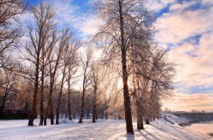 Árvores no frio - Sem folhas, sem verde, sem vida...
